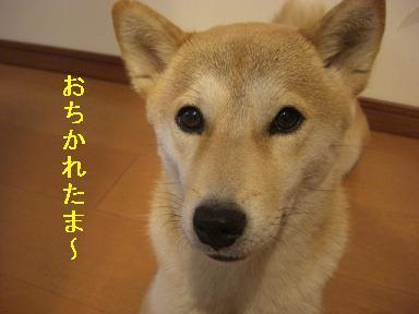 おちかれ0421.