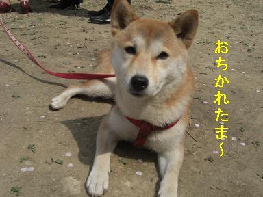 おちかれ0422