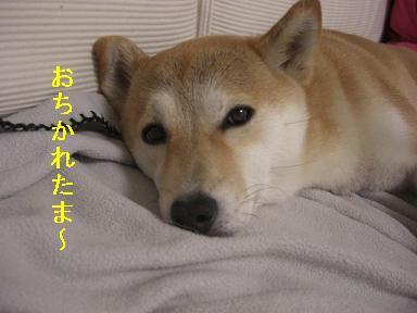 おちかれ0428