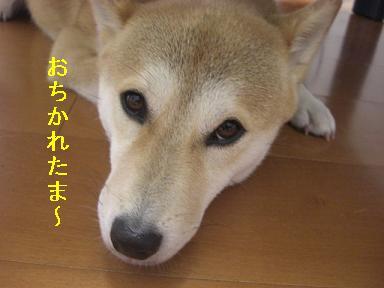 おちかれ0511