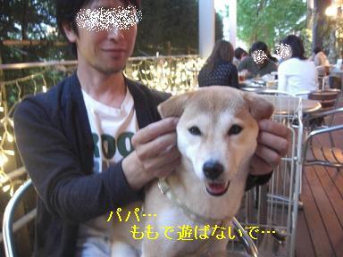 耳タレももちゃん可愛いの~