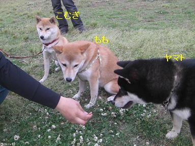 3柴っ子♪