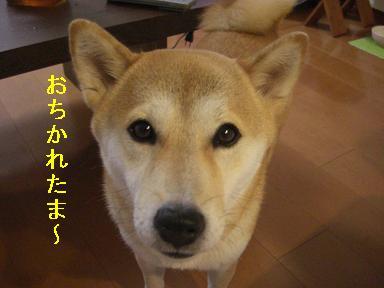おちかれ0610