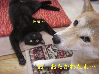 おちかれ0622
