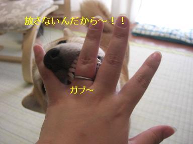 ヒー!放してー!
