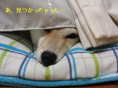 隠れてたの?