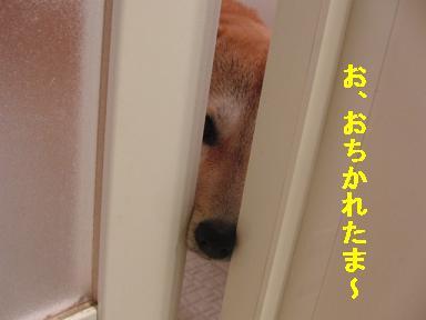 おちかれ0714.