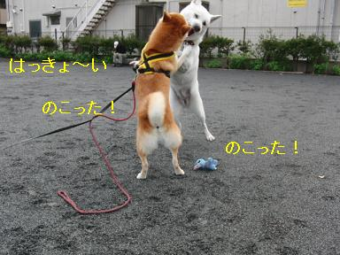 お相撲対決☆