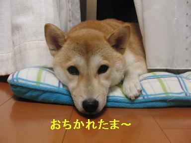 おちかれ0819