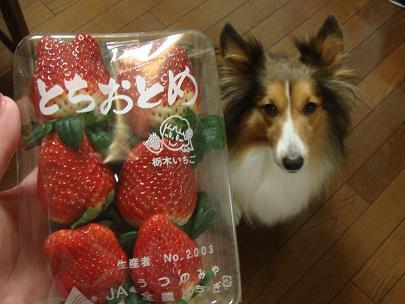 イチゴだよ~ん