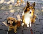 nono&MoMo 公園散歩