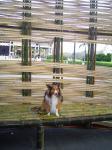 魚籠の中で休憩
