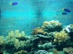 海洋生物博物館内1