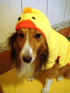 もしかしてお外、雨?