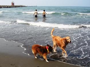 海って、楽しいね~