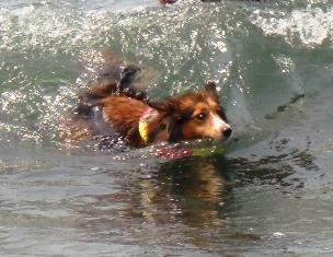 頑張って泳いでます!