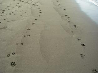 幸せな足跡