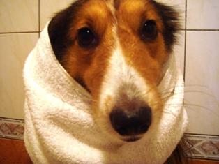 タオルでまきまき