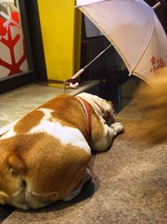 傘キライなの・・・