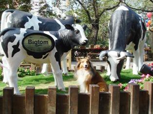 Bigtomの牛さんたちと