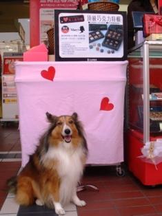 私ももらえるの、バレンタイン?