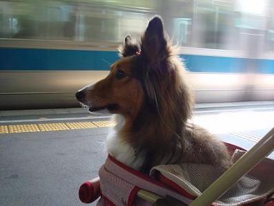 電車に乗るの久しぶりだワン