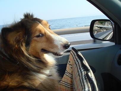 うふっ、ドライブ大好き!