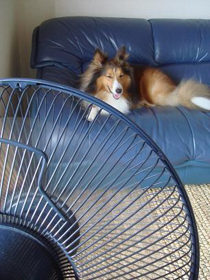 エアコン入れるまで扇風機で我慢