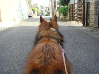 さあ!散歩~♪