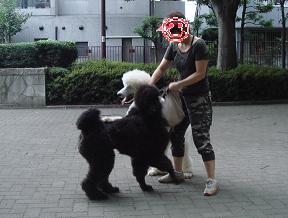 兄弟犬スタプー