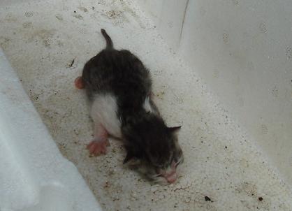 ネズミじゃないです、ネコです。