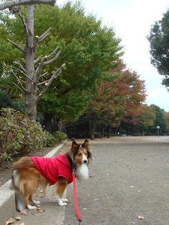 公園も秋色