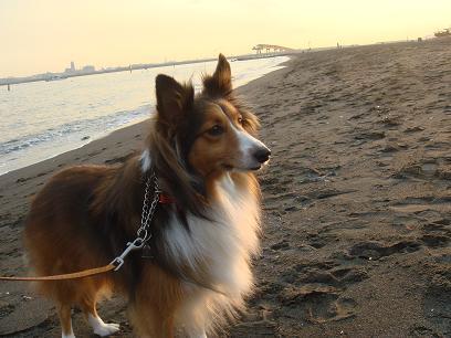 ♪海岸散歩♪