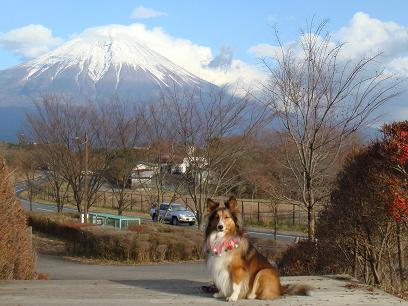 富士山だわん
