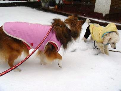 雪の中であそぼ~