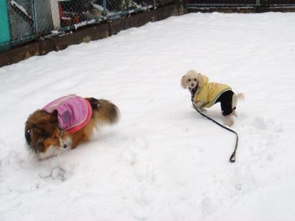 雪の中でもジャレジャレだわん