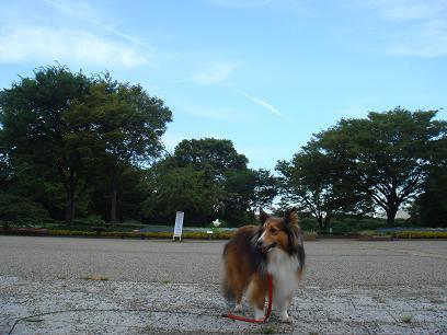さぁ!お散歩お散歩~