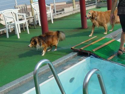 なんで~、私は泳ぎたくないわん!