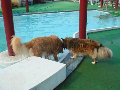いい加減泳ぎなさいよ!