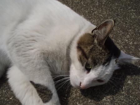 ゴロン猫2