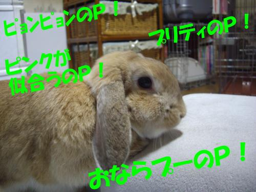 IMGP0432_convert_20080819221214.jpg