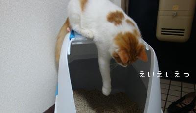 momo46.jpg
