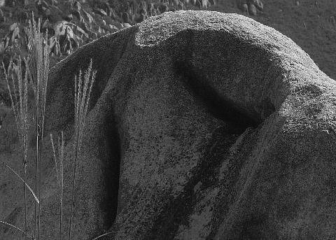 岩の目に涙