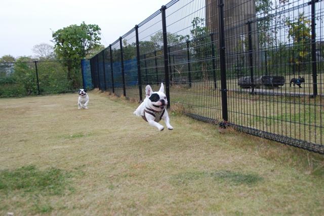 フェンス越しに追いかけっこ