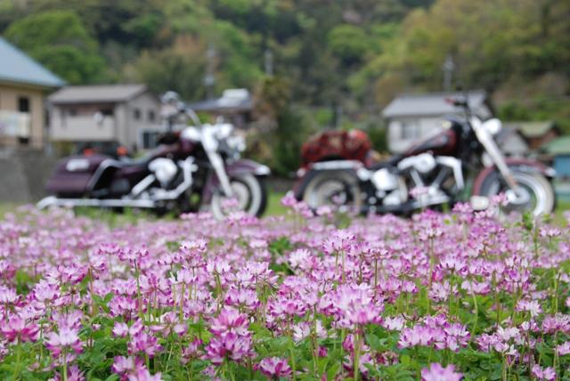 お花とバイク