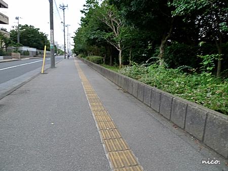 P1000112.jpg