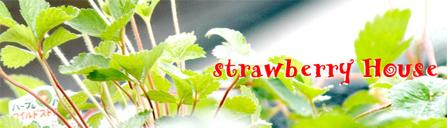 strawberry00.jpg