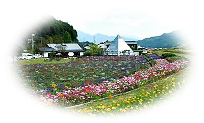 日本棚田百選6