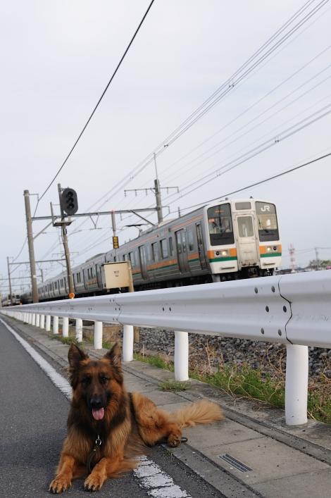 お散歩 064