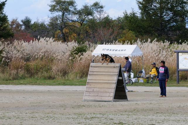 2010 訓練チャンピオン 243